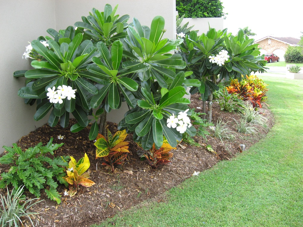 Small Backyard Landscaping Ideas Brisbane : Walls brisbanelandscapers brisbanelandscape solutionsgarden design